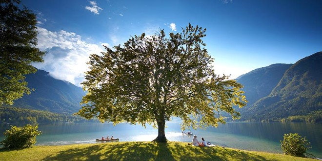 Bohinj Lake Tree