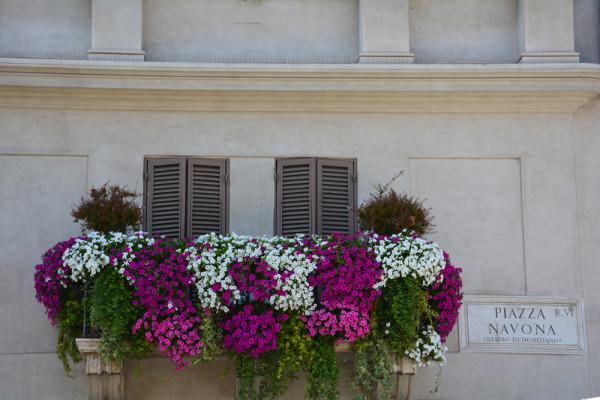Piazza Navona (11)