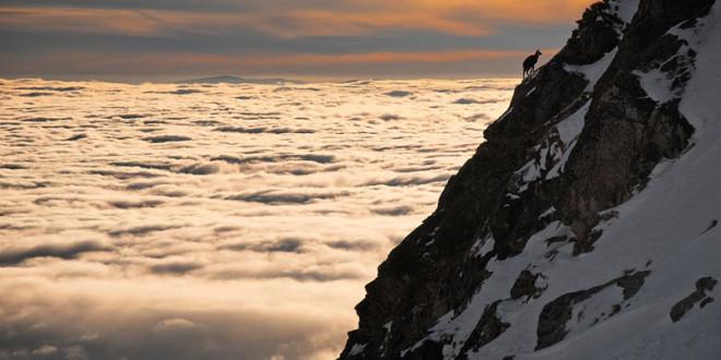 chamois-above-clouds-high-tatras-slovakia
