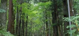Nikko Suginamikia – a leghosszabb, fákkal szegélyezett sugárút