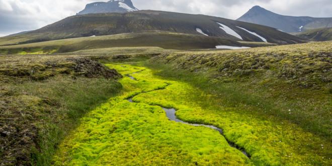 Ahol víz van, ott az élet is megjelenik a júliusi kora tavaszban.