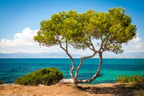 El Arenal – Mallorca riviérája képekben