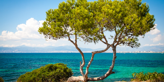 El Arenal - Playa de Palma