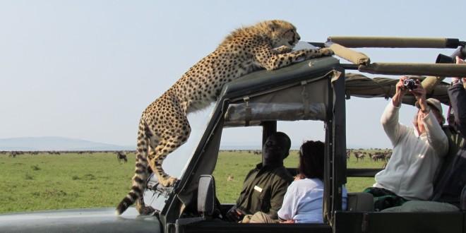 Tanzánia – Szafari a Big Five nyomában
