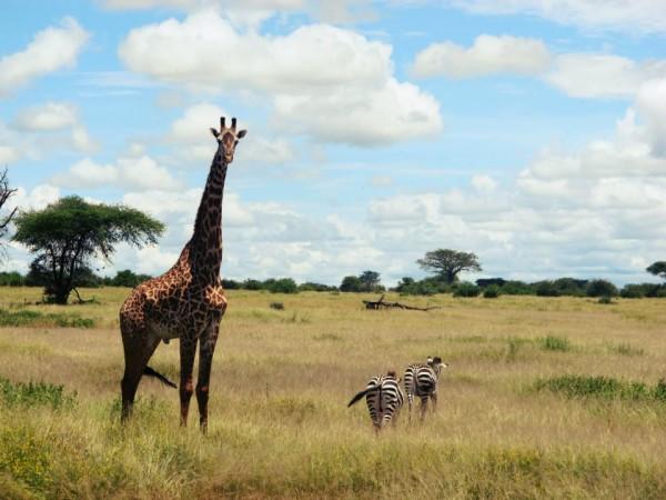 Tanzania (6)