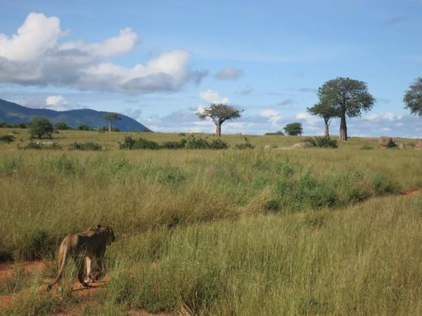 Tanzania (7)