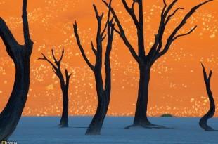 Deadvlei_Namibia1