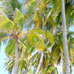 Maafushi_Maldiív-szigetek_3