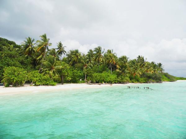 Villingillivaru_Maldiv-szigetek_3