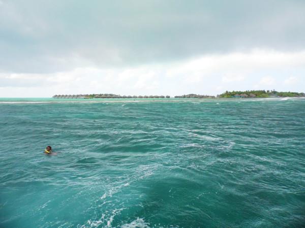 Villingillivaru_Maldiv-szigetek_4