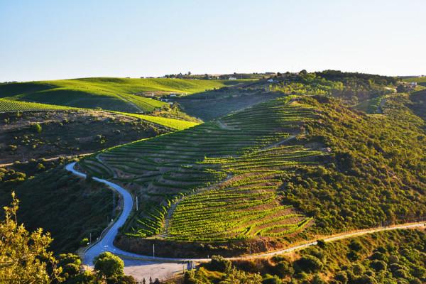 Douro_volgye_Portugalia_4