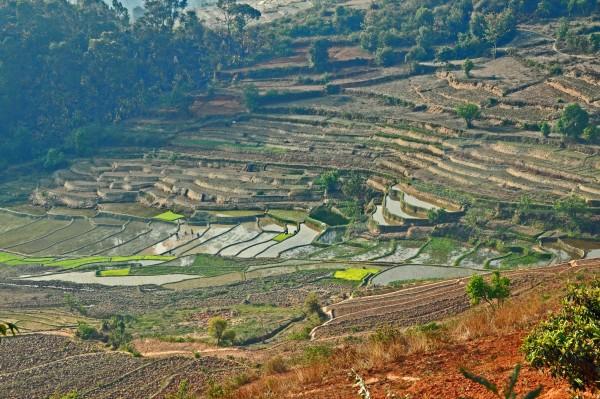 Betafo-rizsfoldek_Madagaszkar