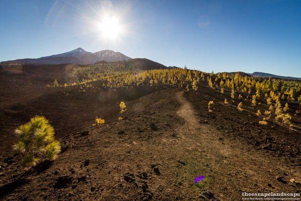 Tenerife_Kanari-szigetek_14_Samara