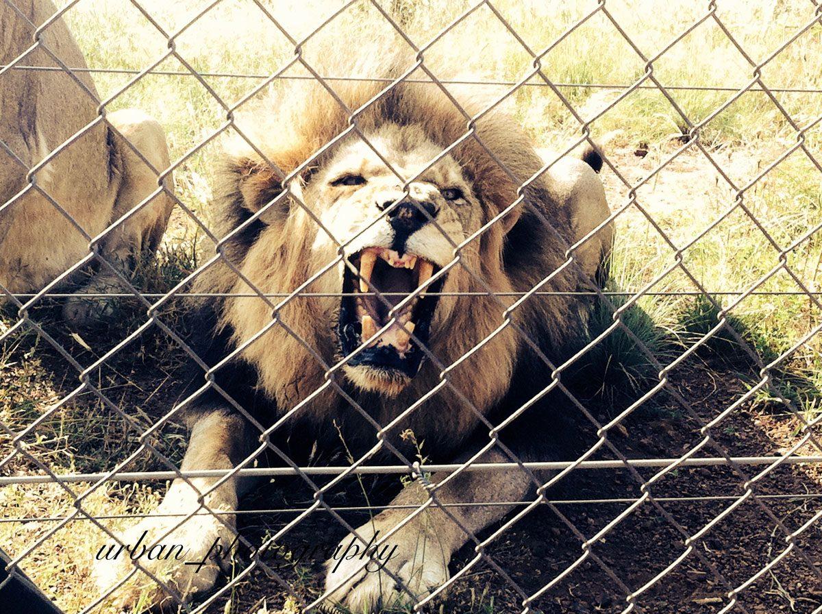 kevin richardsons wildlife sanctuary_del afrika_01