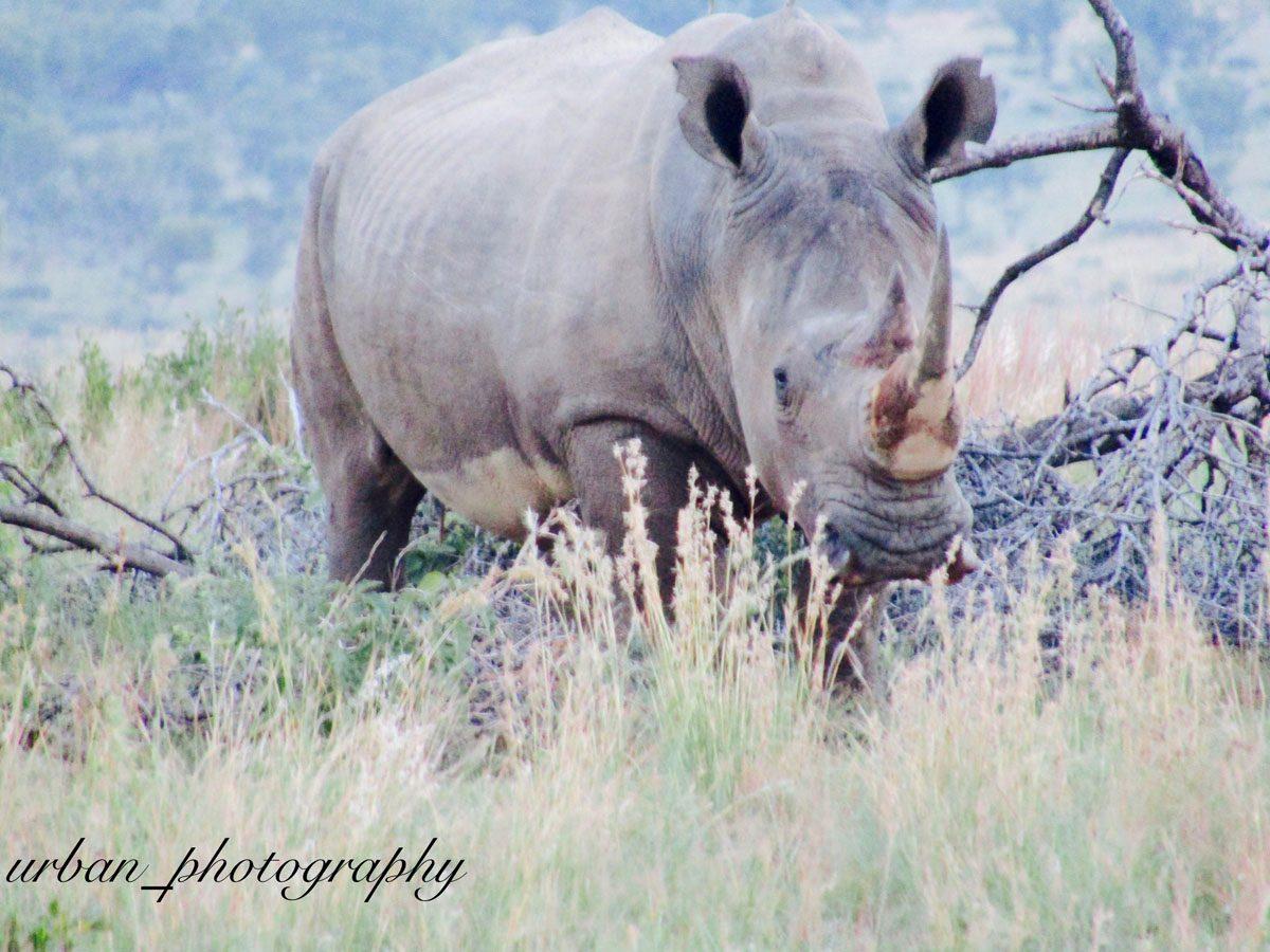 kevin richardsons wildlife sanctuary_del afrika_02