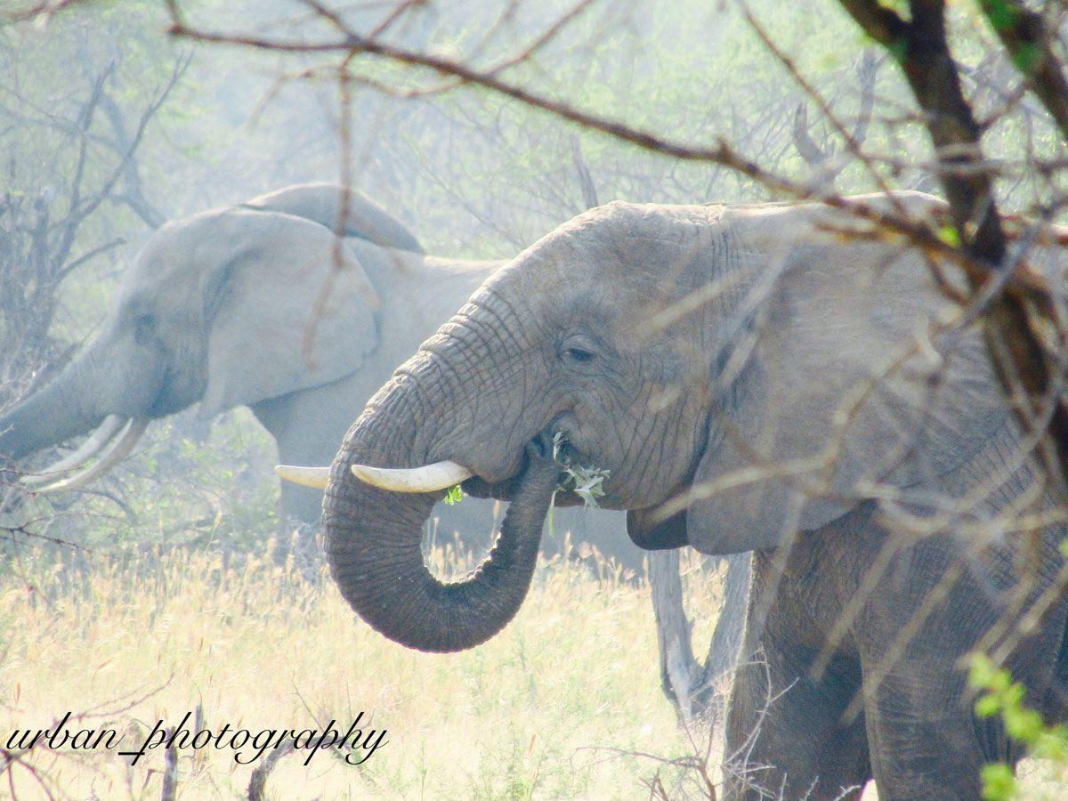 kevin richardsons wildlife sanctuary_del afrika_05
