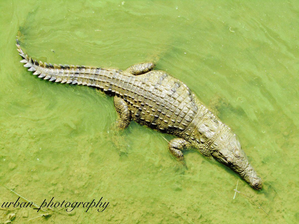 kevin richardsons wildlife sanctuary_del afrika_06