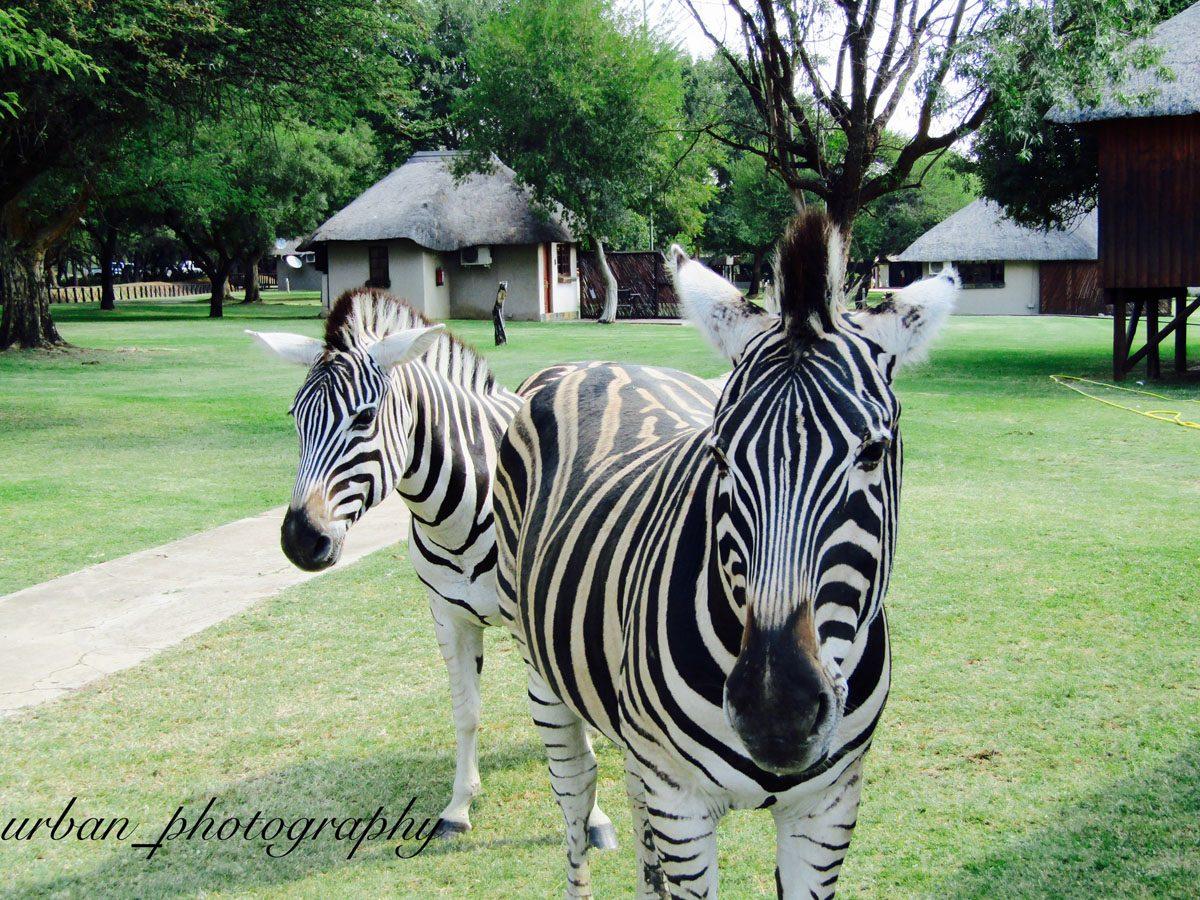 kevin richardsons wildlife sanctuary_del afrika_08