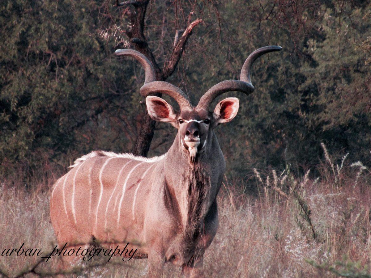 kevin richardsons wildlife sanctuary_del afrika_13