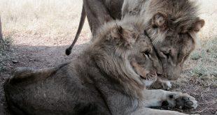 kevin richardsons wildlife sanctuary_del afrika_14
