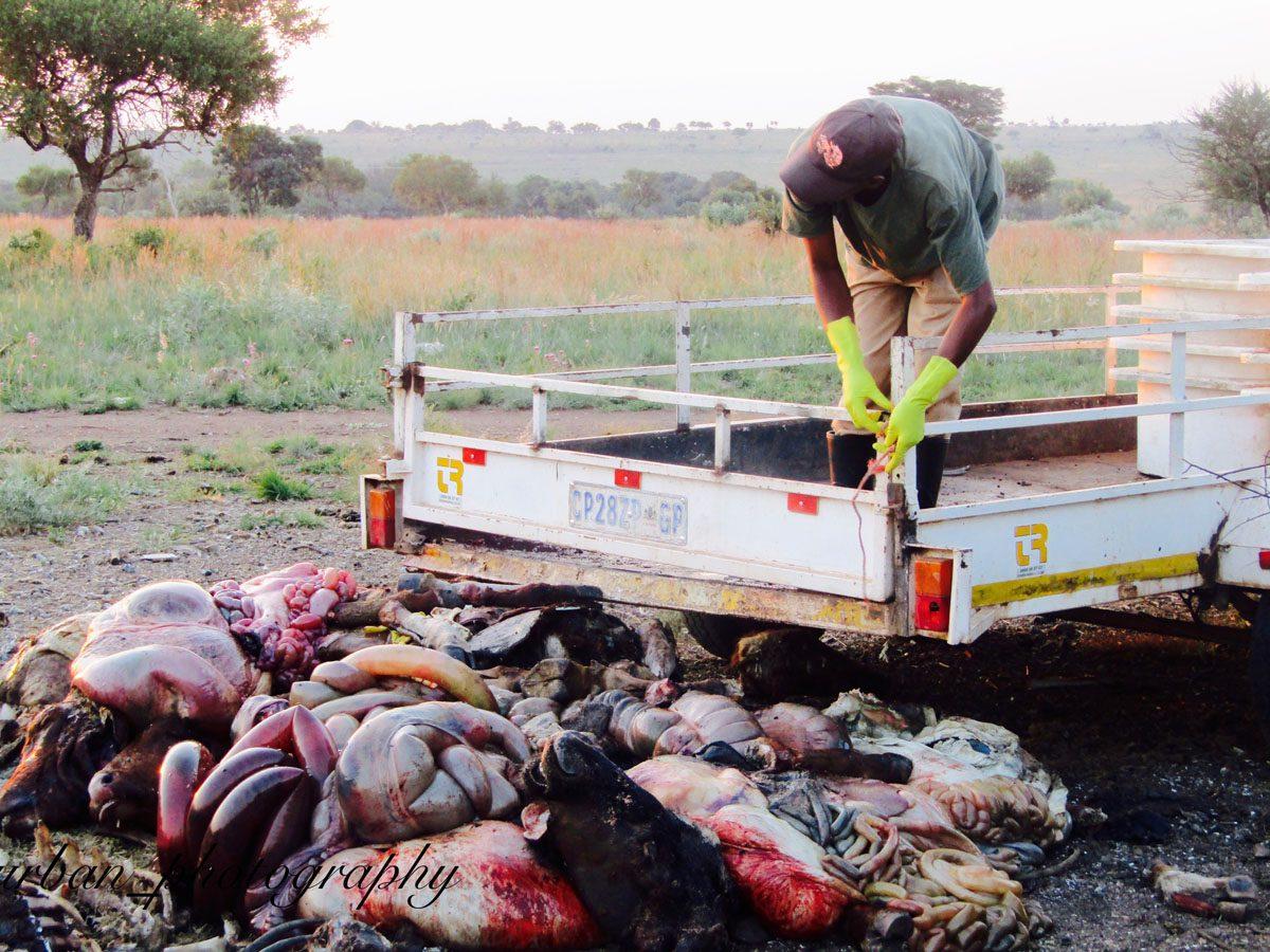 kevin richardsons wildlife sanctuary_del afrika_16