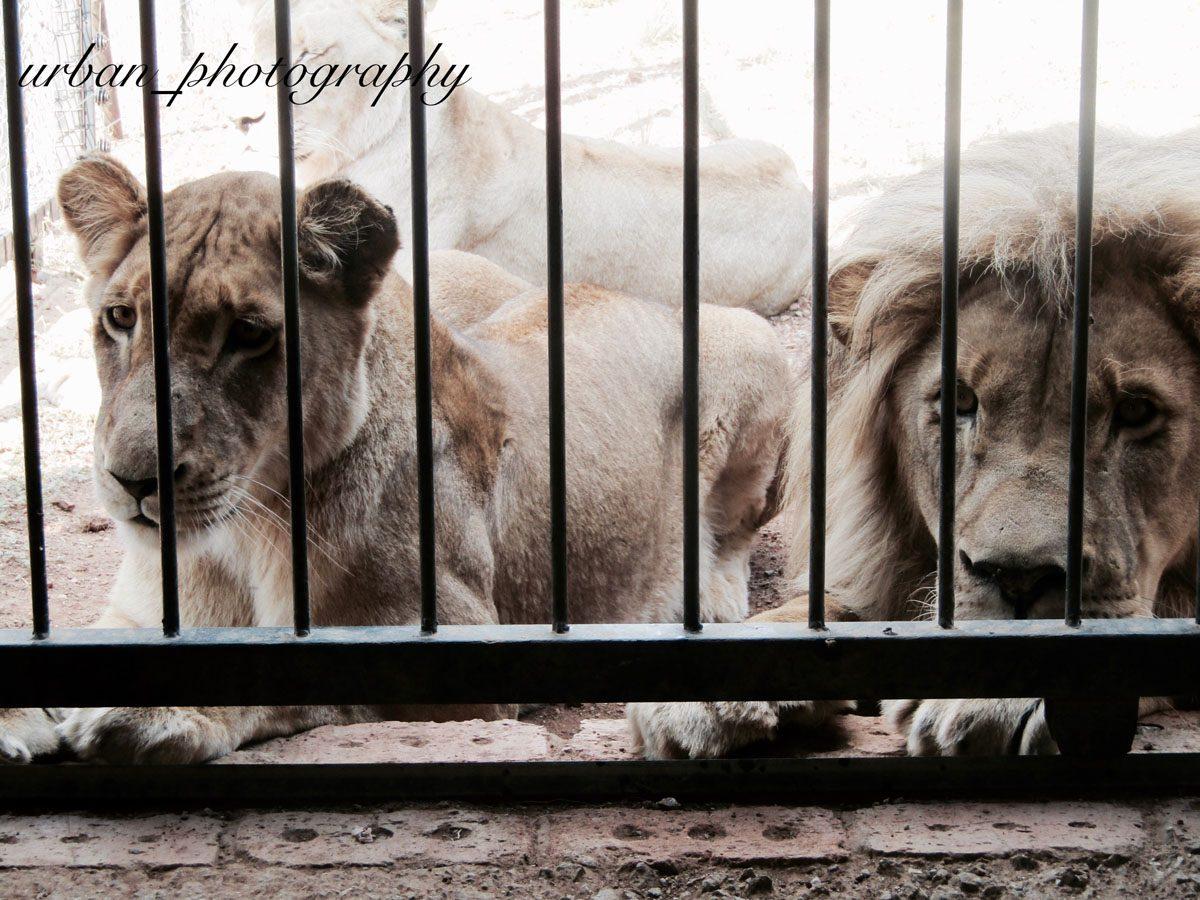 kevin richardsons wildlife sanctuary_del afrika_17