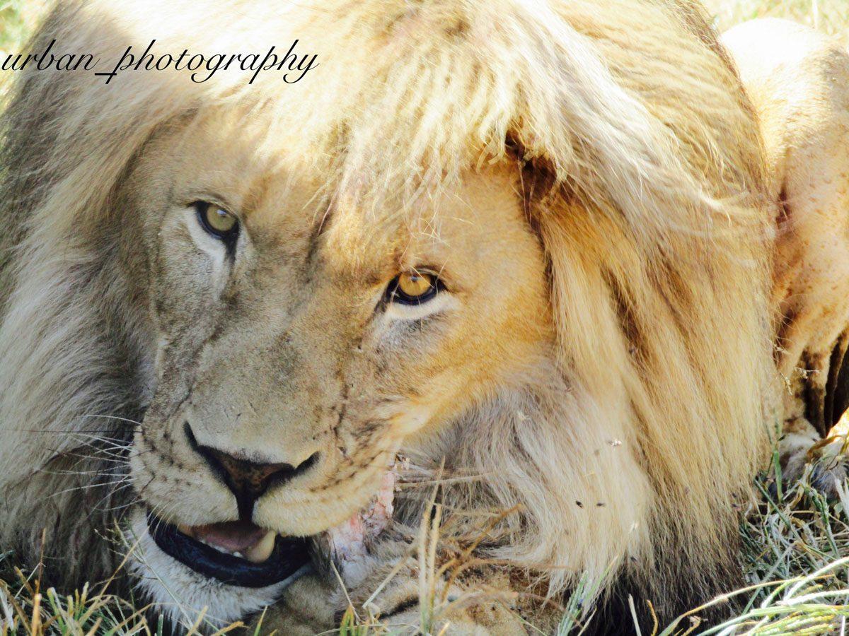 kevin richardsons wildlife sanctuary_del afrika_18