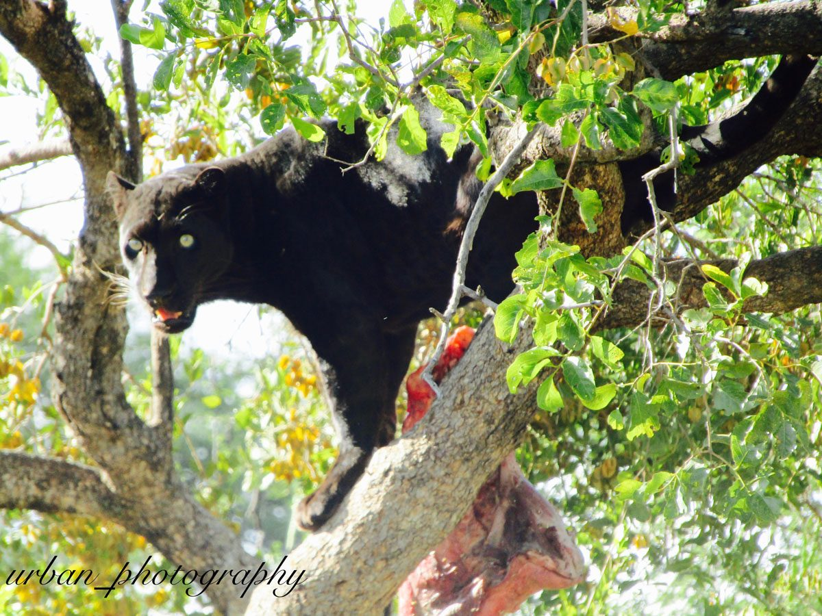 kevin richardsons wildlife sanctuary_del afrika_19