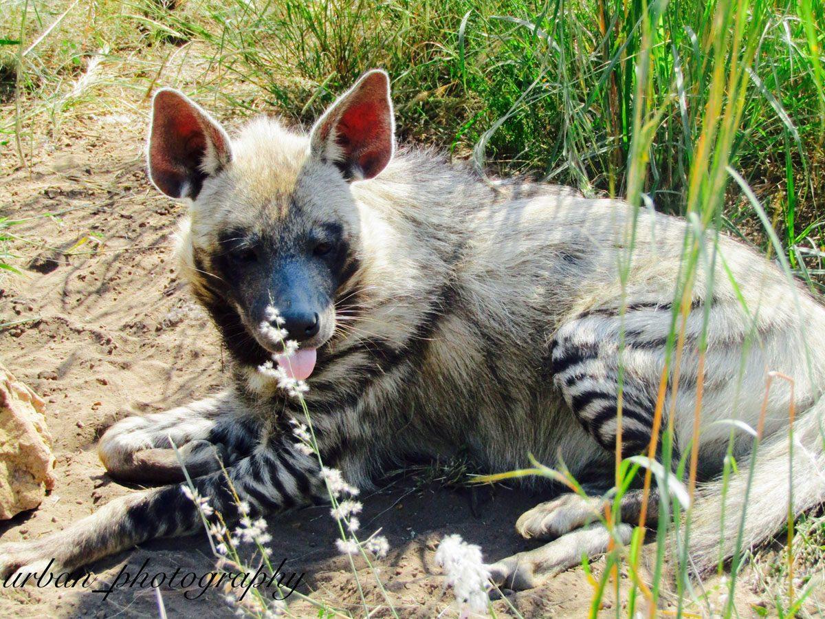 kevin richardsons wildlife sanctuary_del afrika_22