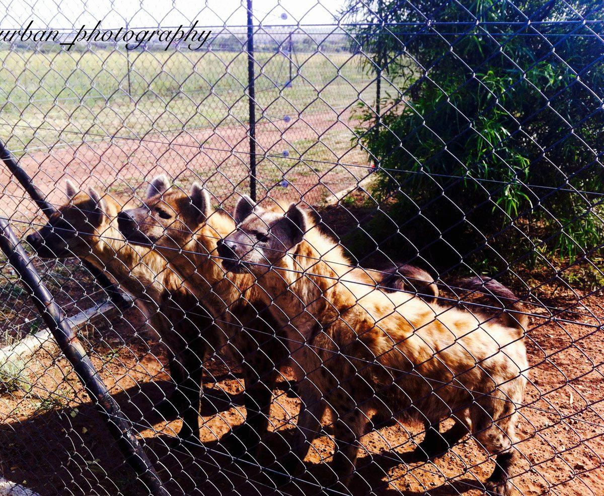 kevin richardsons wildlife sanctuary_del afrika_23