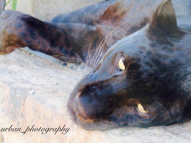 kevin richardsons wildlife sanctuary_del afrika_25