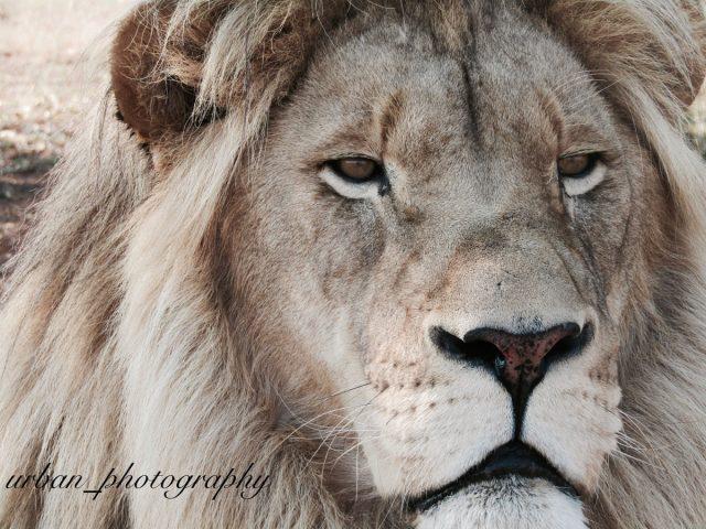 kevin richardsons wildlife sanctuary_del afrika_26