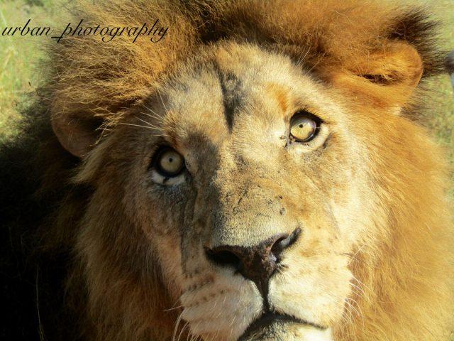 kevin richardsons wildlife sanctuary_del afrika_28