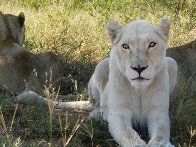 kevin richardsons wildlife sanctuary_del afrika_29