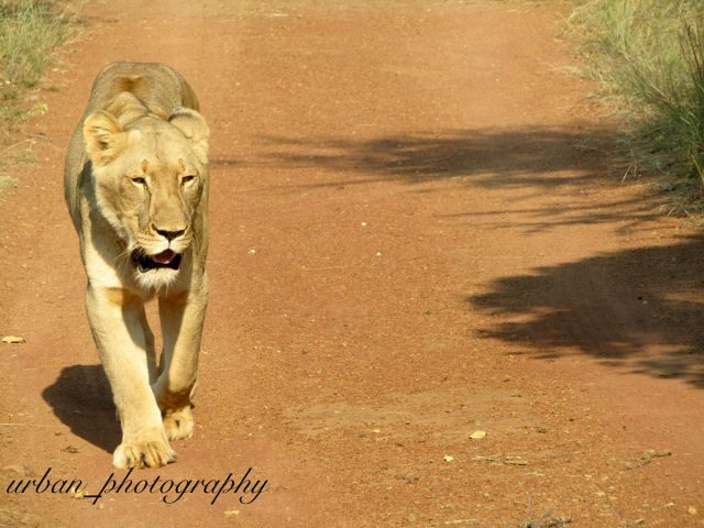 kevin richardsons wildlife sanctuary_del afrika_31