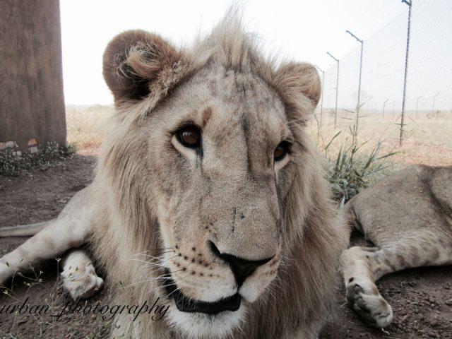 kevin richardsons wildlife sanctuary_del afrika_33