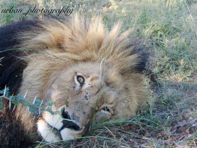 kevin richardsons wildlife sanctuary_del afrika_37