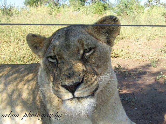 kevin richardsons wildlife sanctuary_del afrika_38