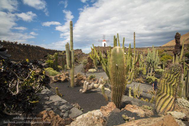 lanzarote_kanari szigetek_el jardin de cactus_2