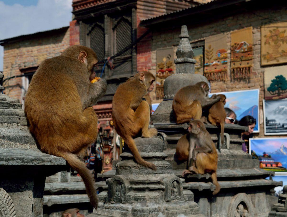 nepal_annapurna-tura_05