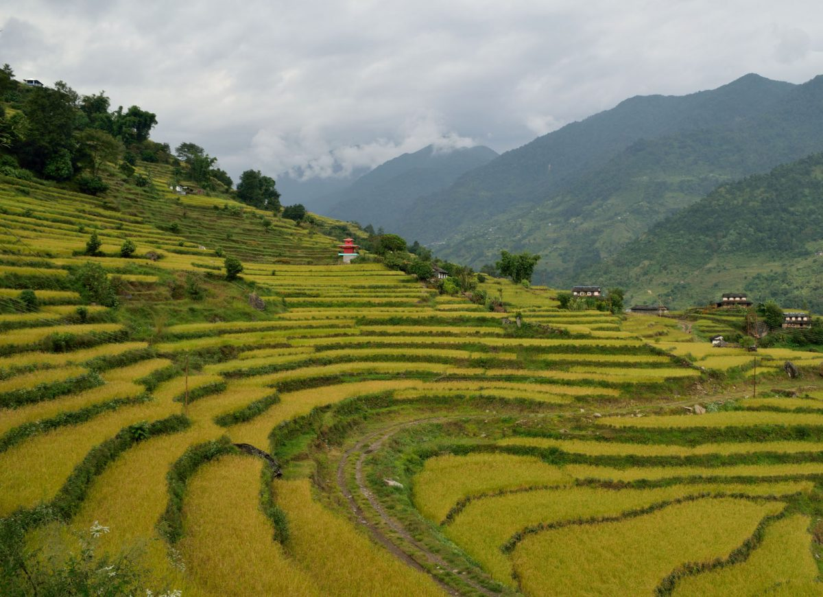 nepal_annapurna-tura_08