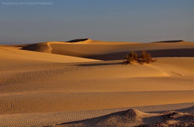 oman_wahiba-sivatag_08