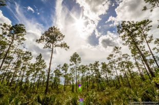 everglades_nemzeti_park_florida_05