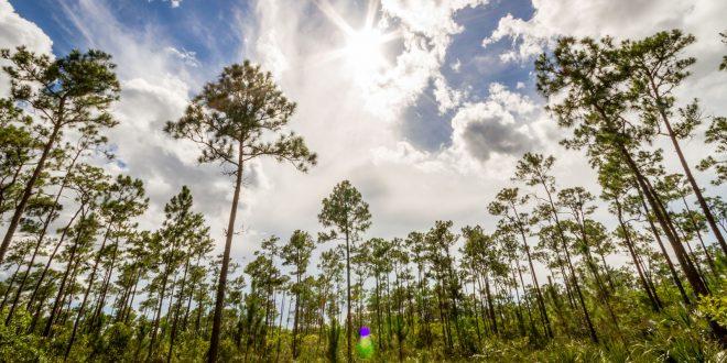 Az Everglades Nemzeti Park képekben
