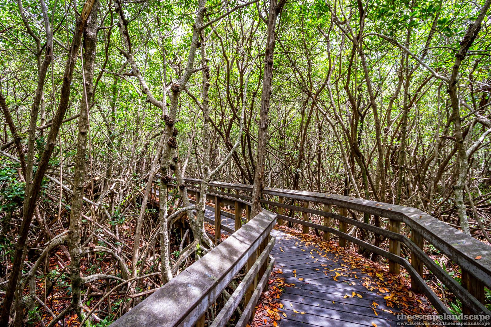 everglades_nemzeti_park_florida_10