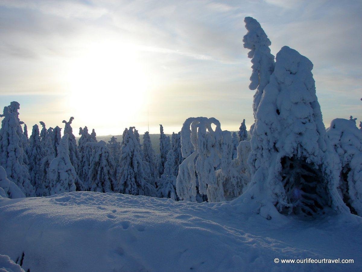 Hóval borított fák a csúcs környékén
