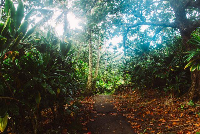 roadtohana_maui_hawaii_15
