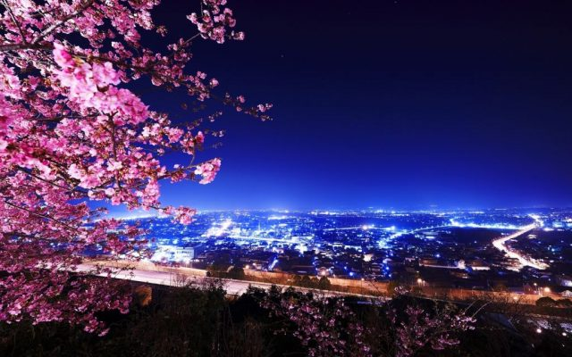 jtb_sakura_japan_02
