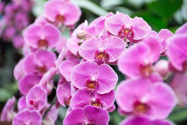 oceanorchids_10