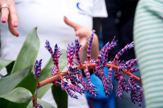 oceanorchids_5